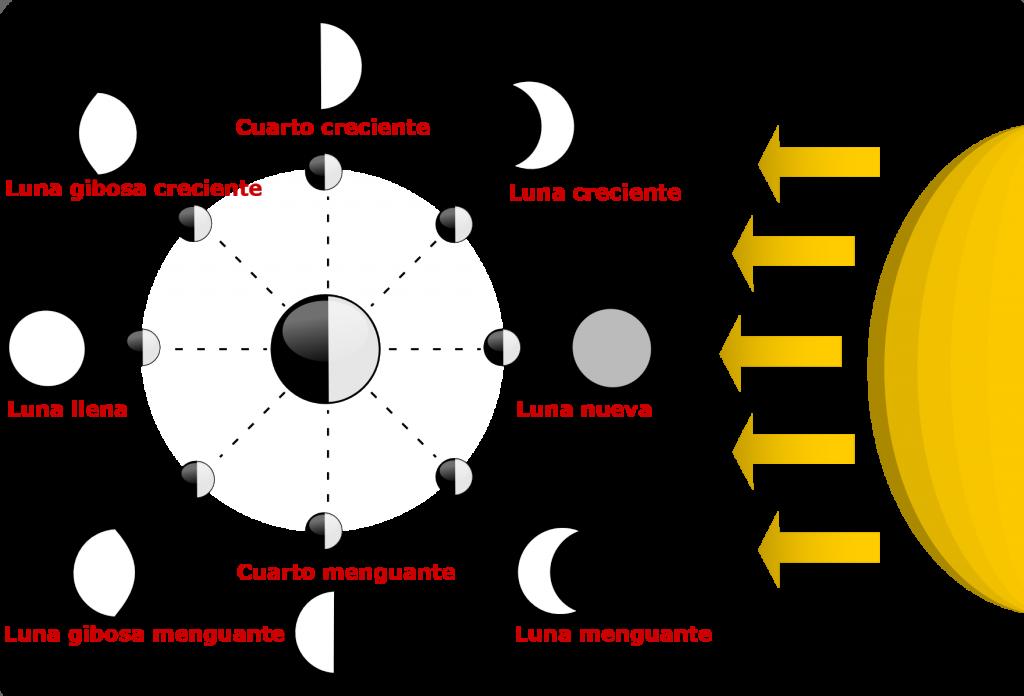 Fases lunares. Conoce las fase lunar hoy y otras fases lunares.